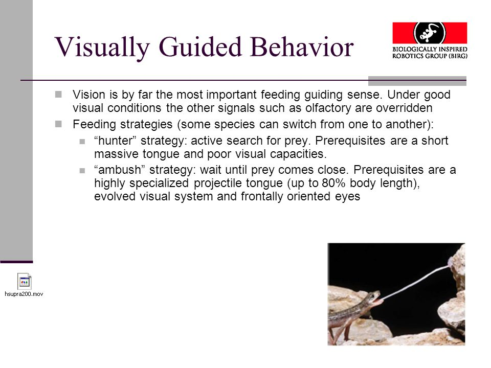 Visually Guided Behavior Vision is by far the most important feeding guiding sense.