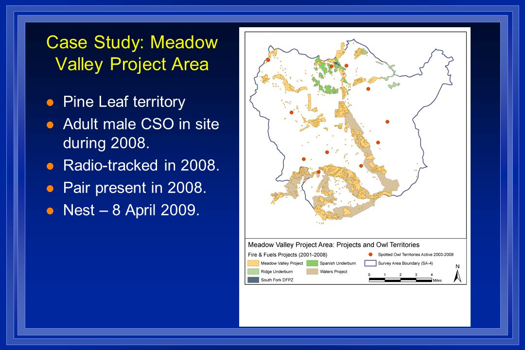 Case Study: Meadow Valley Project Area l Pine Leaf territory l Adult male CSO in site during 2008.