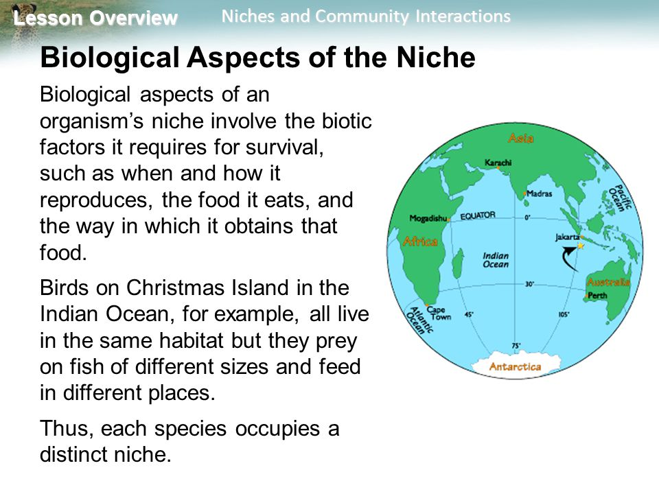 Lesson Overview Lesson Overview Niches and Community Interactions Biological Aspects of the Niche Biological aspects of an organism's niche involve th