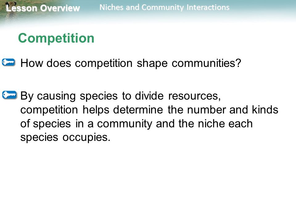 Lesson Overview Lesson Overview Niches and Community Interactions Competition How does competition shape communities? By causing species to divide res