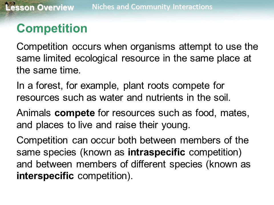 Lesson Overview Lesson Overview Niches and Community Interactions Competition Competition occurs when organisms attempt to use the same limited ecolog