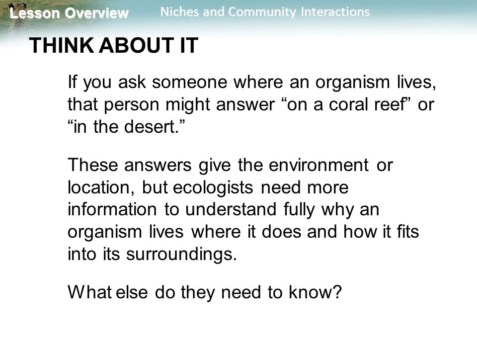 Lesson Overview Lesson Overview Niches and Community Interactions THINK ABOUT IT If you ask someone where an organism lives, that person might answer