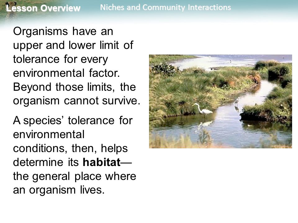 Lesson Overview Lesson Overview Niches and Community Interactions Organisms have an upper and lower limit of tolerance for every environmental factor.