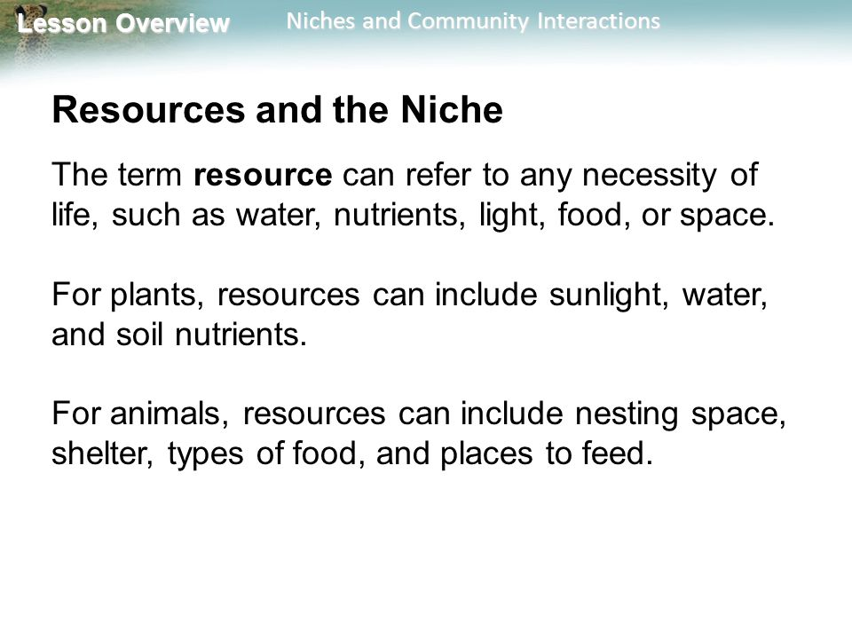 Lesson Overview Lesson Overview Niches and Community Interactions Resources and the Niche The term resource can refer to any necessity of life, such a