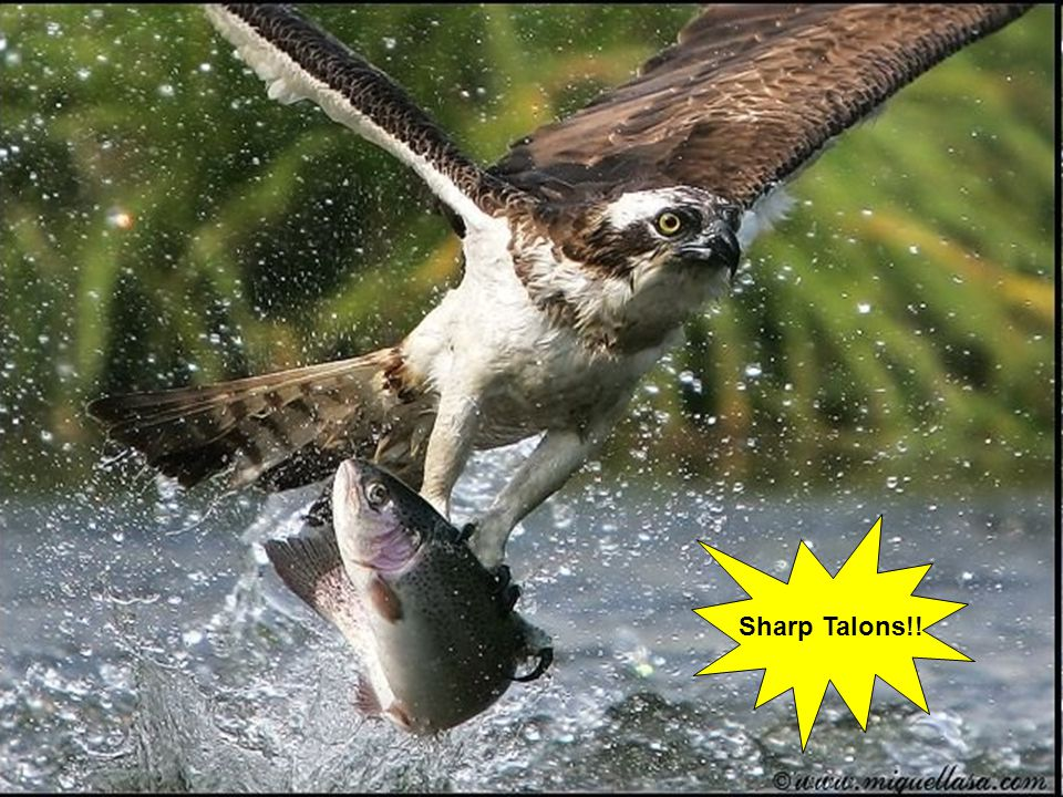 Sharp Talons!!
