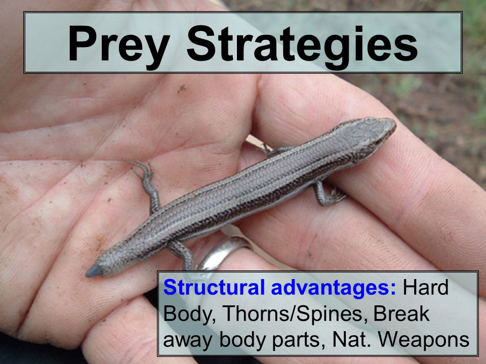 Structural advantages: Hard Body, Thorns/Spines, Break away body parts, Nat.