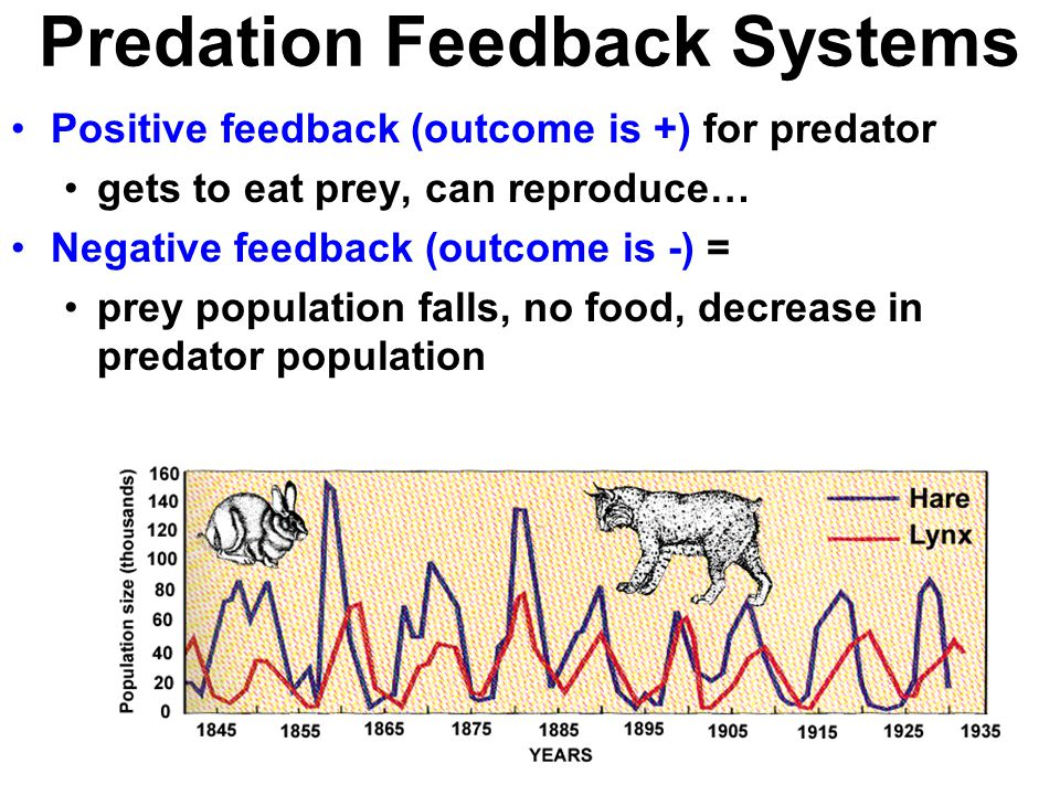 Predation Feedback Systems Positive feedback (outcome is +) for predator gets to eat prey, can reproduce… Negative feedback (outcome is -) = prey population falls, no food, decrease in predator population