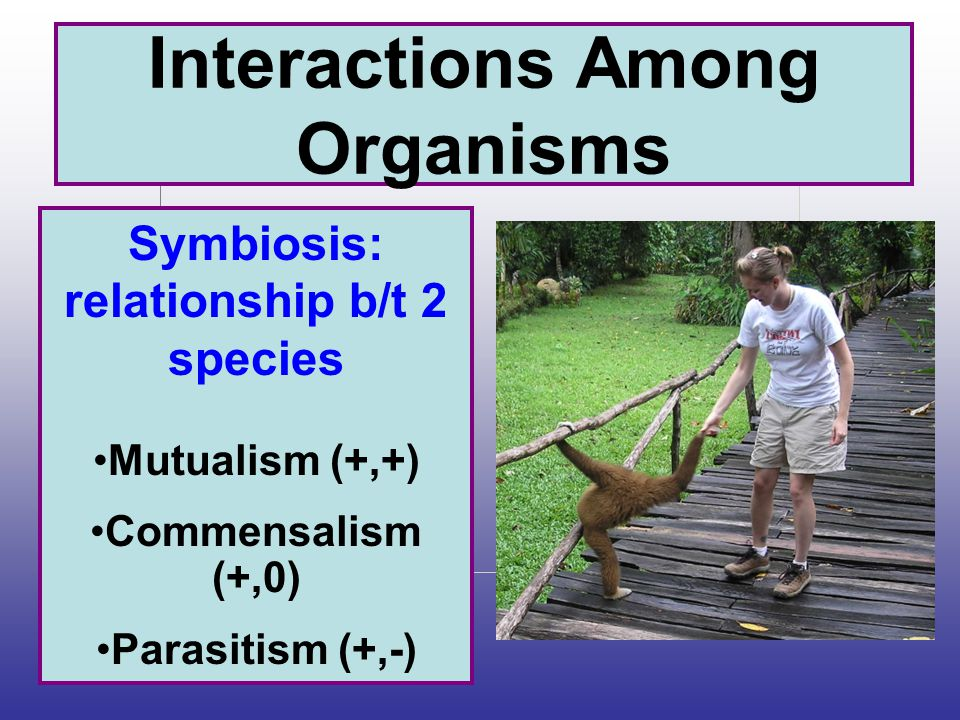 Interactions Among Organisms Symbiosis: relationship b/t 2 species Mutualism (+,+) Commensalism (+,0) Parasitism (+,-)