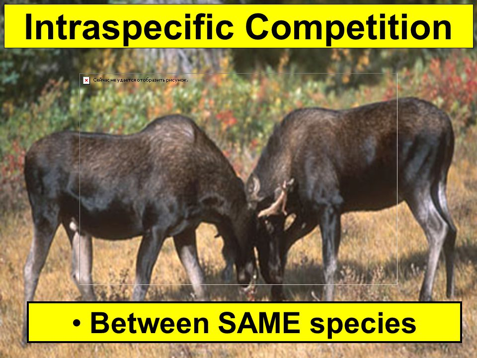 Intraspecific Competition Between SAME species