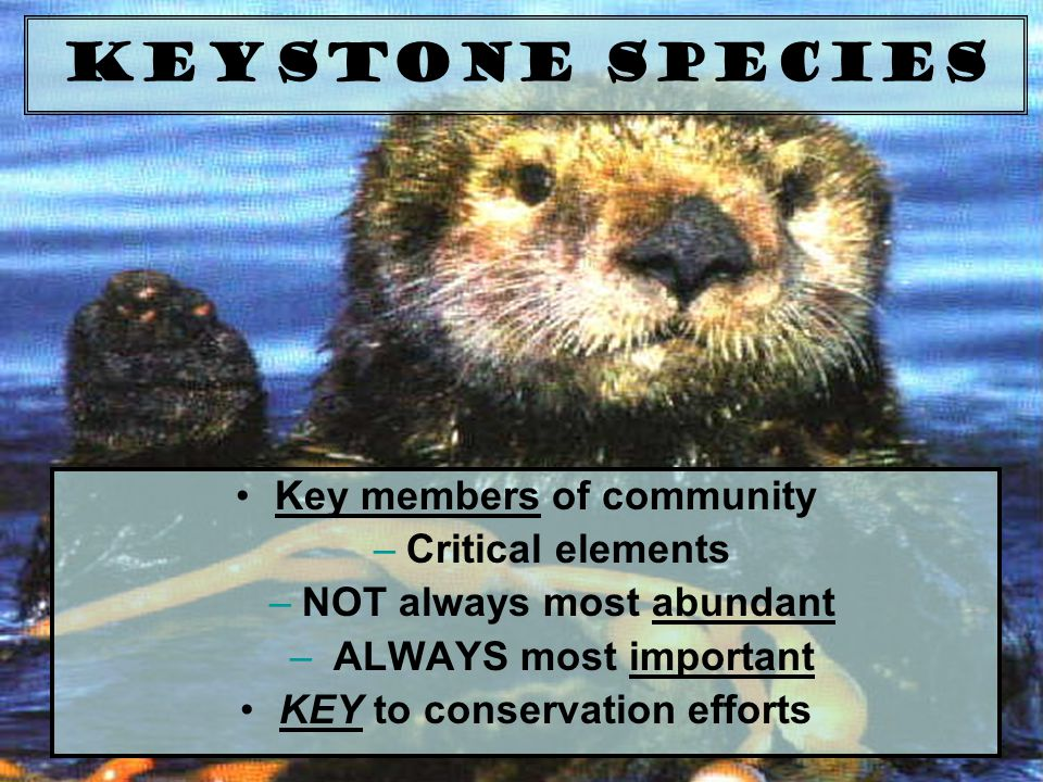 Keystone Species Key members of community –Critical elements –NOT always most abundant – ALWAYS most important KEY to conservation efforts