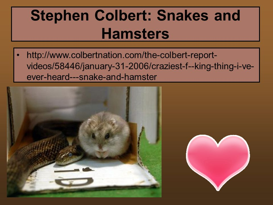 Stephen Colbert: Snakes and Hamsters http://www.comedycentral.com/motherload /index.jhtml ml_video=58446 http://www.colbertnation.com/the-colbert-report- videos/58446/january-31-2006/craziest-f--king-thing-i-ve- ever-heard---snake-and-hamster