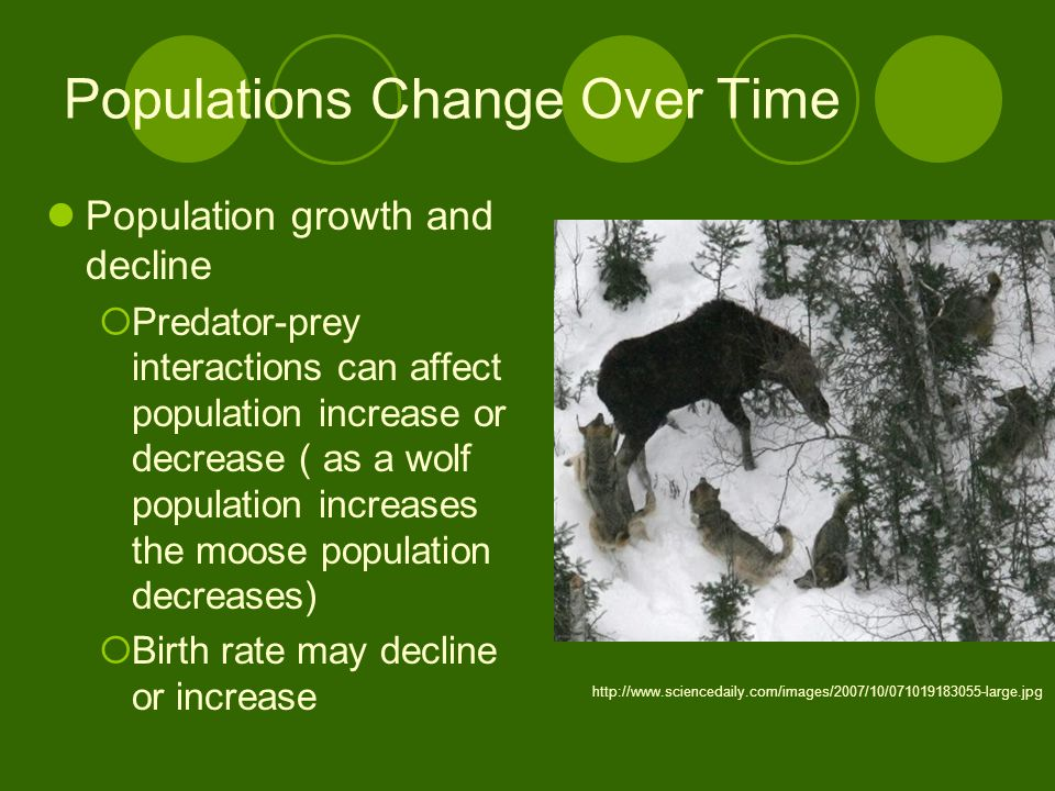 Populations Change Over Time Population growth and decline  Predator-prey interactions can affect population increase or decrease ( as a wolf population increases the moose population decreases)  Birth rate may decline or increase http://www.sciencedaily.com/images/2007/10/071019183055-large.jpg