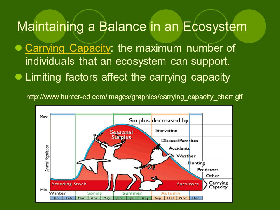 Maintaining a Balance in an Ecosystem Carrying Capacity: the maximum number of individuals that an ecosystem can support.