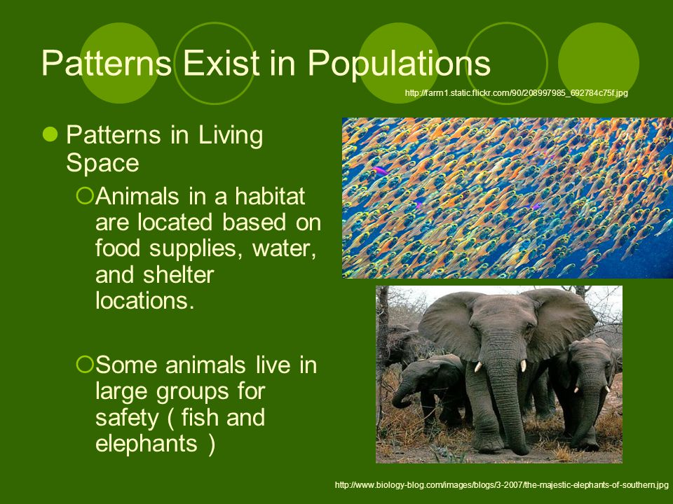 Patterns Exist in Populations Patterns in Living Space  Animals in a habitat are located based on food supplies, water, and shelter locations.