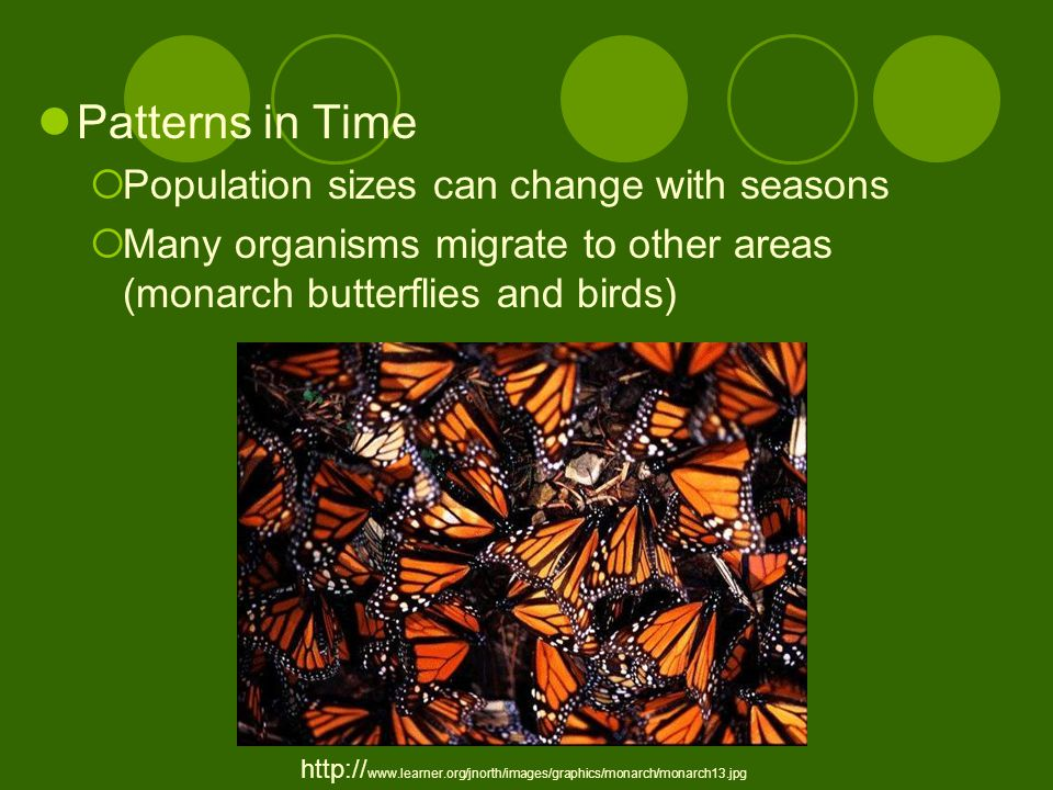 Patterns in Time  Population sizes can change with seasons  Many organisms migrate to other areas (monarch butterflies and birds) http:// www.learner.org/jnorth/images/graphics/monarch/monarch13.jpg
