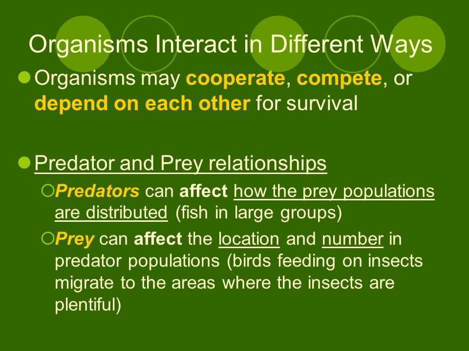 Organisms Interact in Different Ways Organisms may cooperate, compete, or depend on each other for survival Predator and Prey relationships  Predators can affect how the prey populations are distributed (fish in large groups)  Prey can affect the location and number in predator populations (birds feeding on insects migrate to the areas where the insects are plentiful)