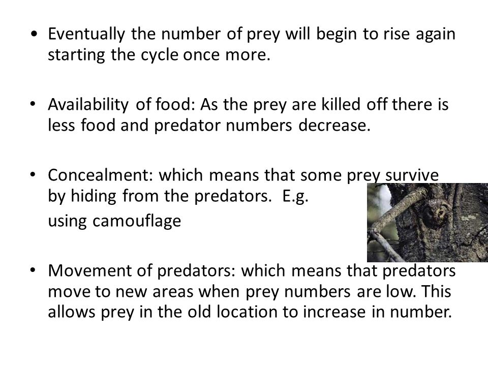 Eventually the number of prey will begin to rise again starting the cycle once more.