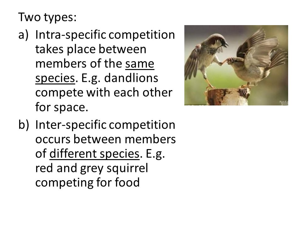 Two types: a)Intra-specific competition takes place between members of the same species.