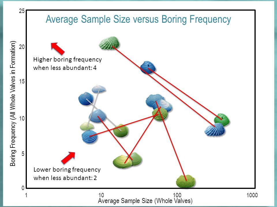 Average Sample Size (Whole Valves) 0 1101001000 5 10 15 20 25 Boring Frequency (All Whole Valves in Formation) Average Sample Size versus Boring Frequency Higher boring frequency when less abundant: 4 Lower boring frequency when less abundant: 2