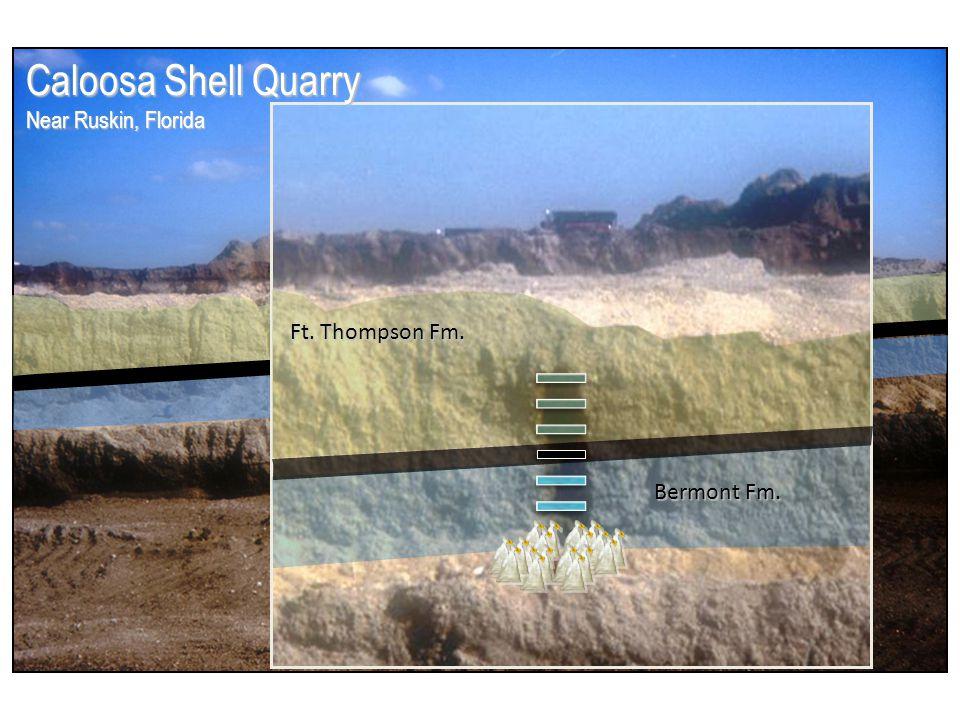 Bermont Formation (Pleistocene) Ft.