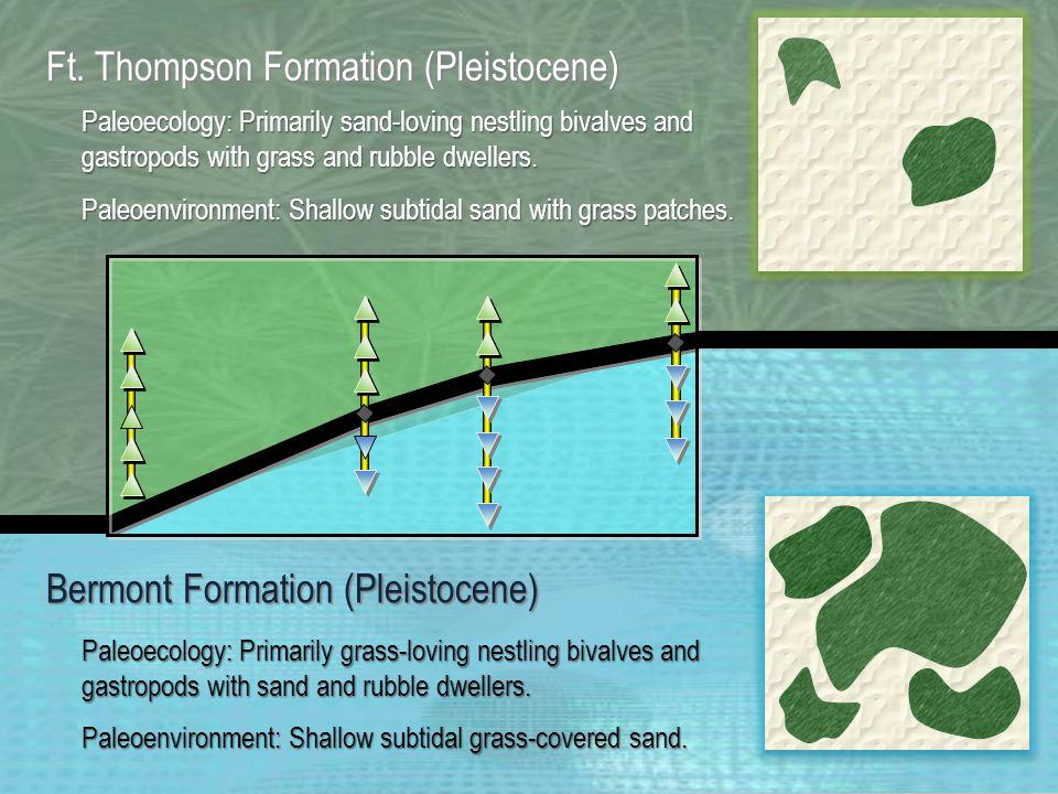 Prey Size versus Predator Size 0.00 1.002.003.004.00 0.10 0.20 0.30 0.40 0.50 0.60 Shell Length (cm) Ft.