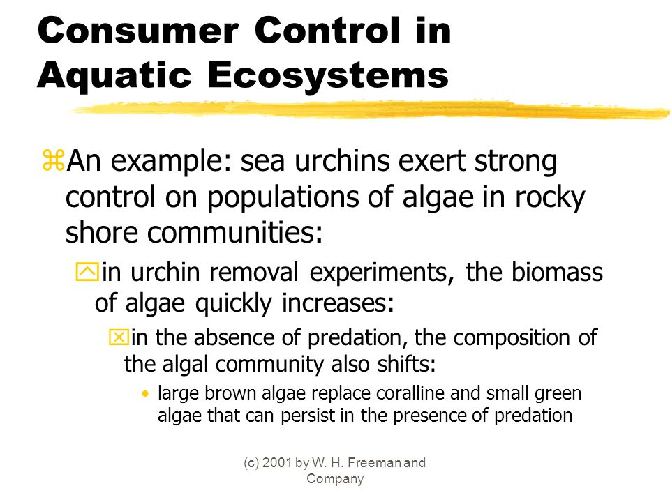 (c) 2001 by W. H. Freeman and Company Consumer Control in Aquatic Ecosystems zAn example: sea urchins exert strong control on populations of algae in