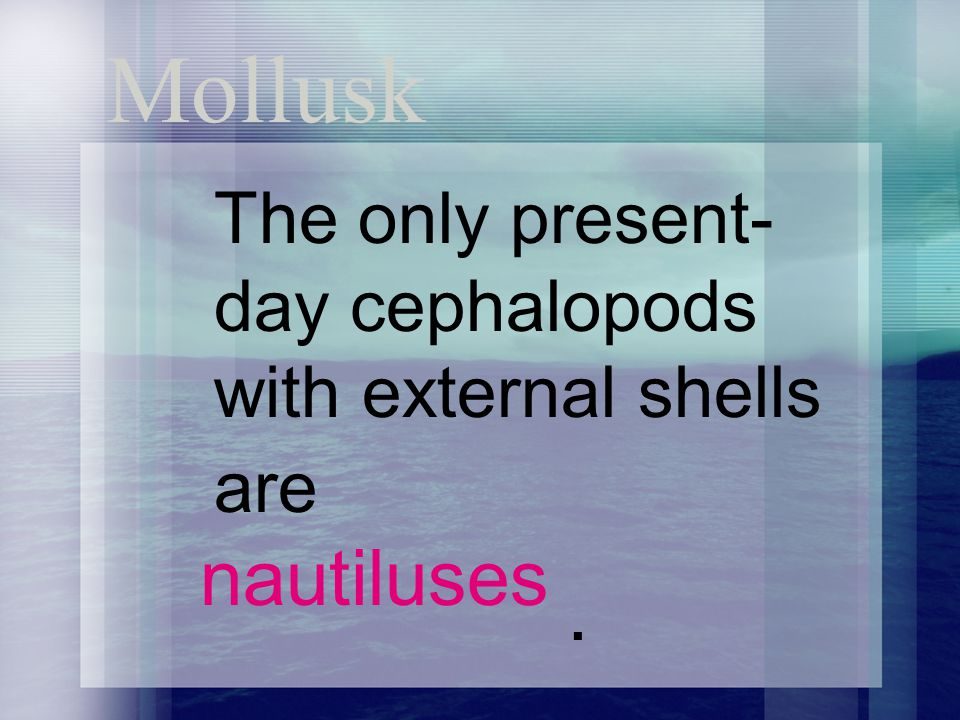 Mollusk The only present- day cephalopods with external shells are nautiluses.