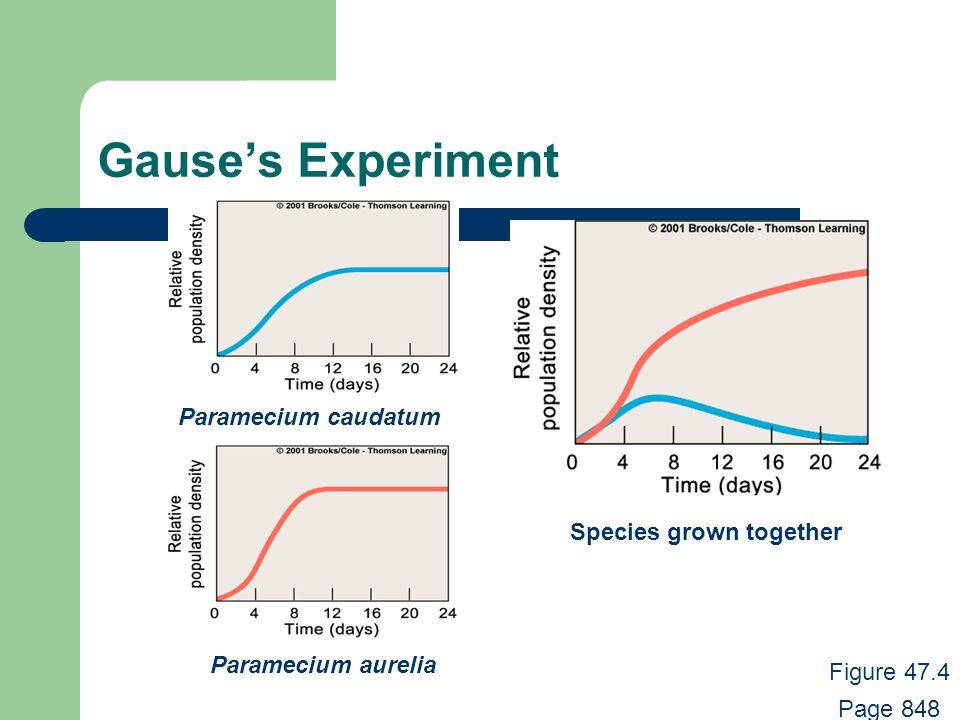 Gause's Experiment Paramecium caudatum Paramecium aurelia Figure 47.4 Page 848 Species grown together