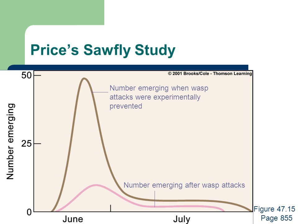 Price's Sawfly Study Number emerging when wasp attacks were experimentally prevented Number emerging after wasp attacks Figure 47.15 Page 855