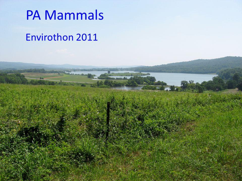 PA Mammals Envirothon 2011