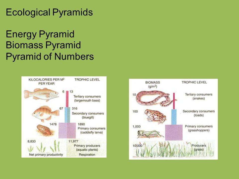 Ecological Pyramids Energy Pyramid Biomass Pyramid Pyramid of Numbers