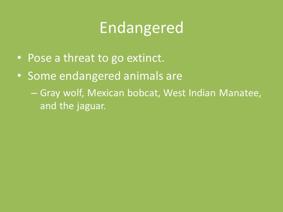 Endangered Pose a threat to go extinct. Some endangered animals are – Gray wolf, Mexican bobcat, West Indian Manatee, and the jaguar.