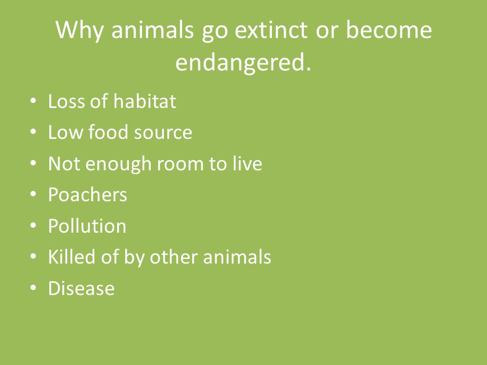 Why animals go extinct or become endangered. Loss of habitat Low food source Not enough room to live Poachers Pollution Killed of by other animals Dis