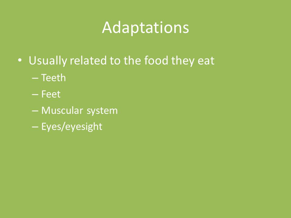 Adaptations Usually related to the food they eat – Teeth – Feet – Muscular system – Eyes/eyesight
