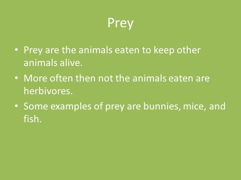 Prey Prey are the animals eaten to keep other animals alive. More often then not the animals eaten are herbivores. Some examples of prey are bunnies,