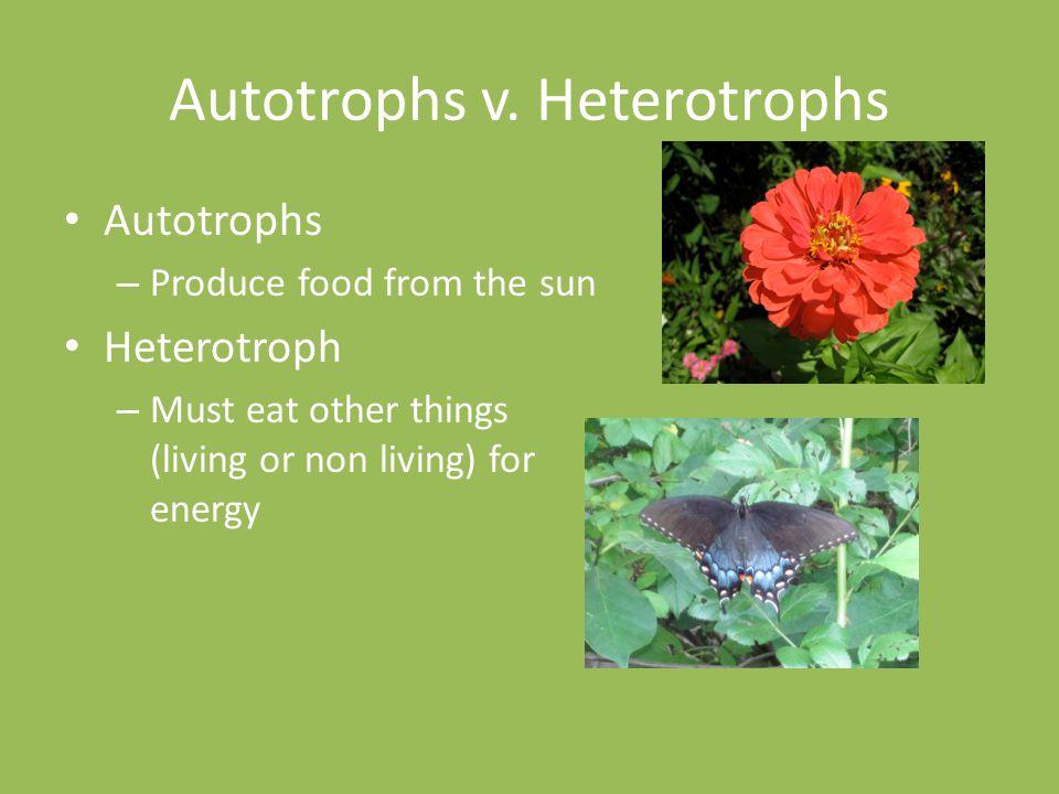 Autotrophs v.