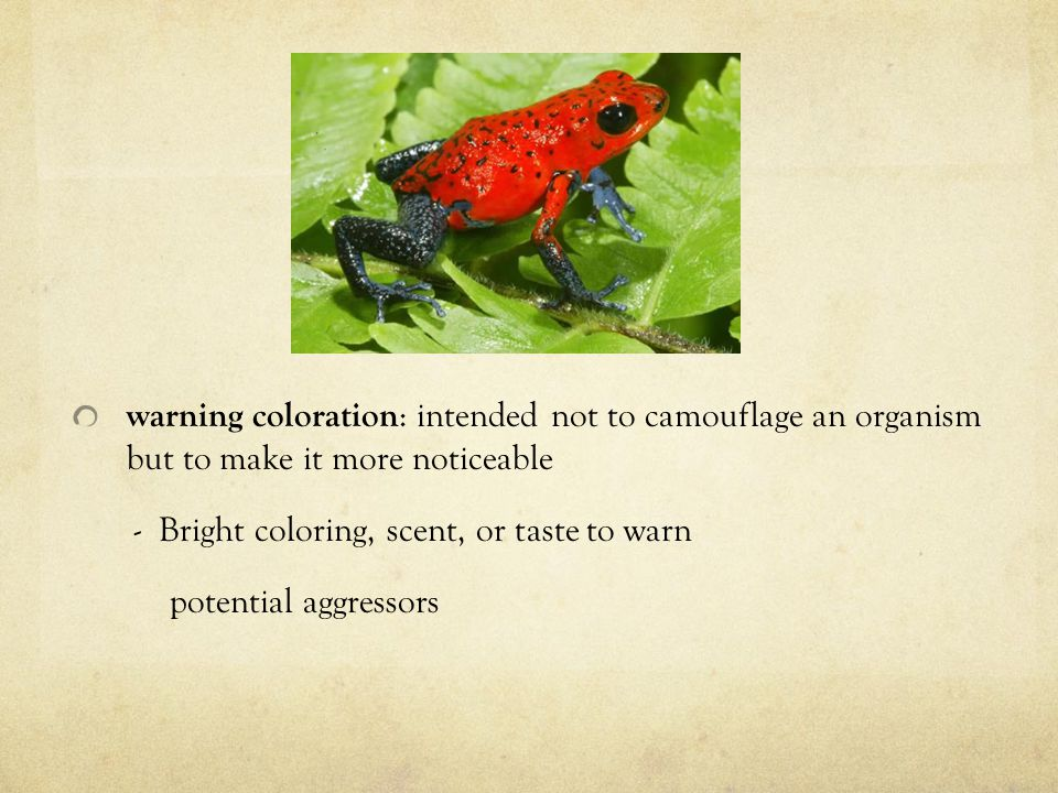 warning coloration : intended not to camouflage an organism but to make it more noticeable - Bright coloring, scent, or taste to warn potential aggressors