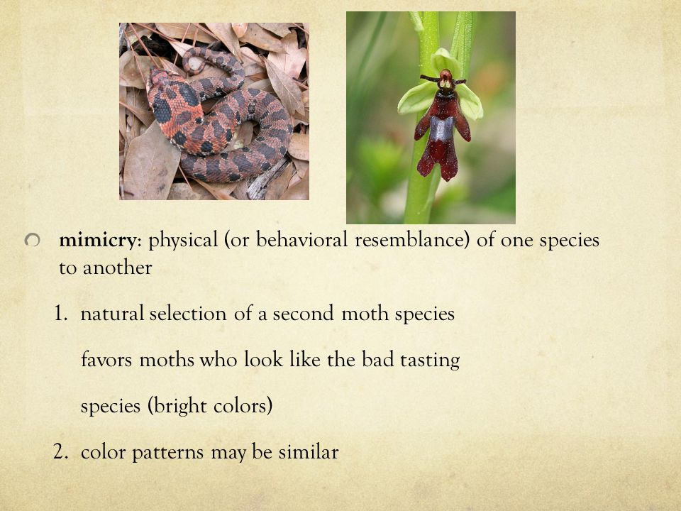 mimicry : physical (or behavioral resemblance) of one species to another 1.