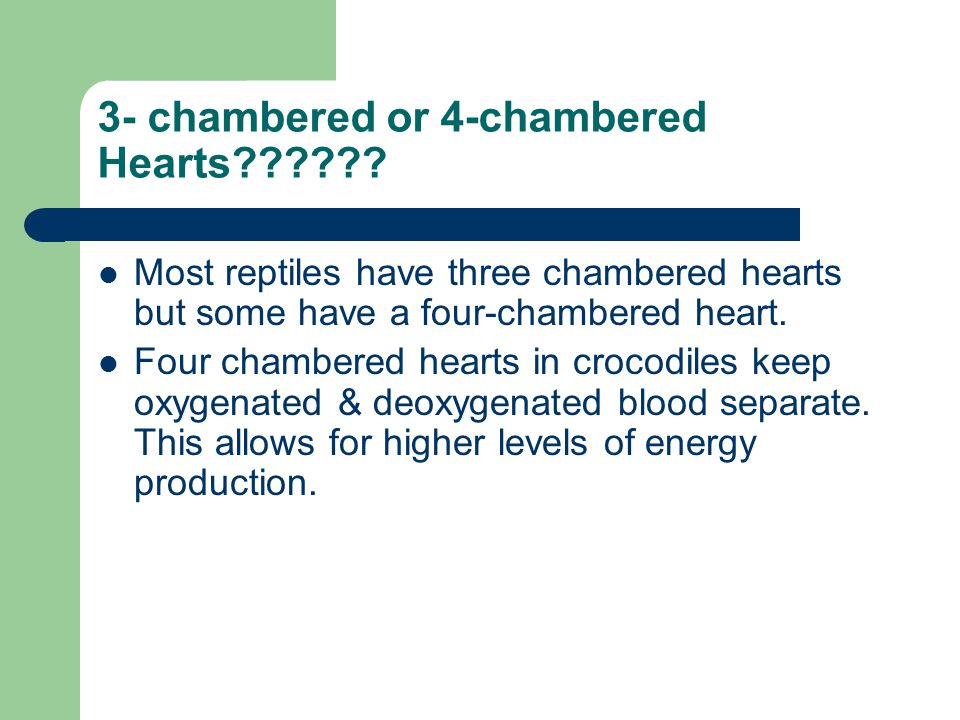 3- chambered or 4-chambered Hearts?????? Most reptiles have three chambered hearts but some have a four-chambered heart. Four chambered hearts in croc
