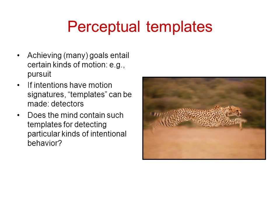 Perceptual templates Achieving (many) goals entail certain kinds of motion: e.g., pursuit If intentions have motion signatures, templates can be made: detectors Does the mind contain such templates for detecting particular kinds of intentional behavior