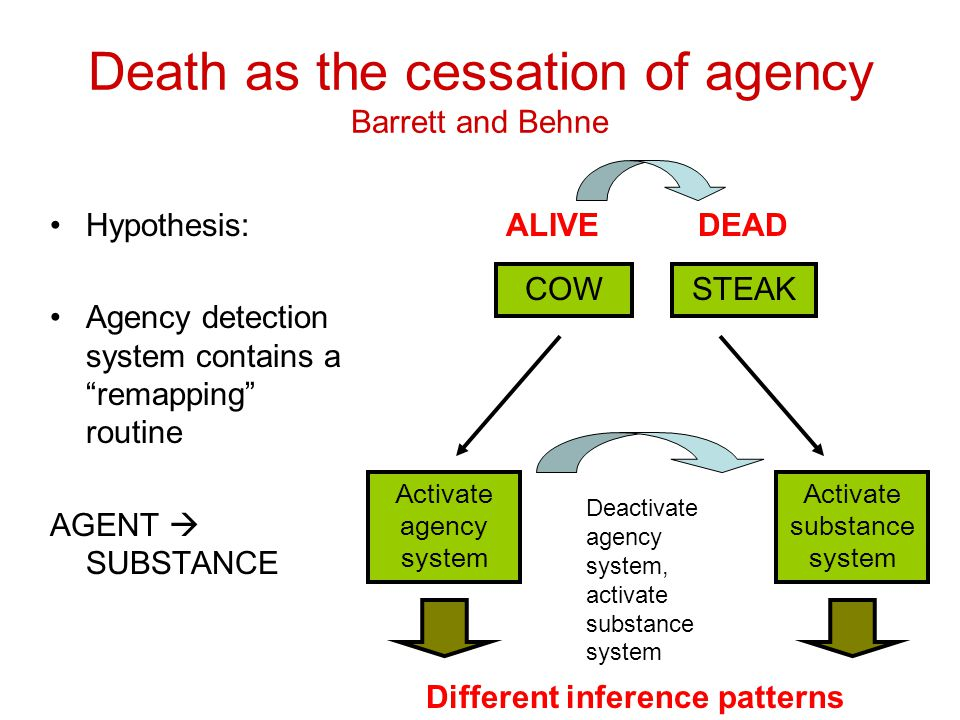 Death as the cessation of agency Barrett and Behne Hypothesis: Agency detection system contains a remapping routine AGENT  SUBSTANCE COWSTEAK Activate agency system Activate substance system ALIVEDEAD Different inference patterns Deactivate agency system, activate substance system
