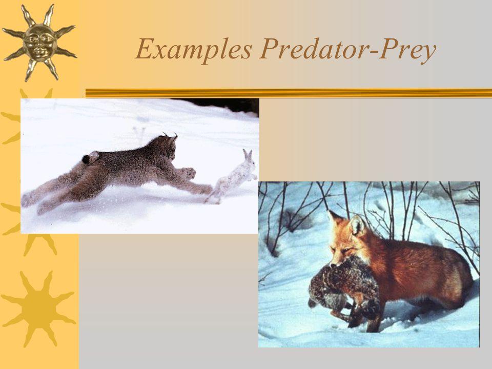 Examples Predator-Prey
