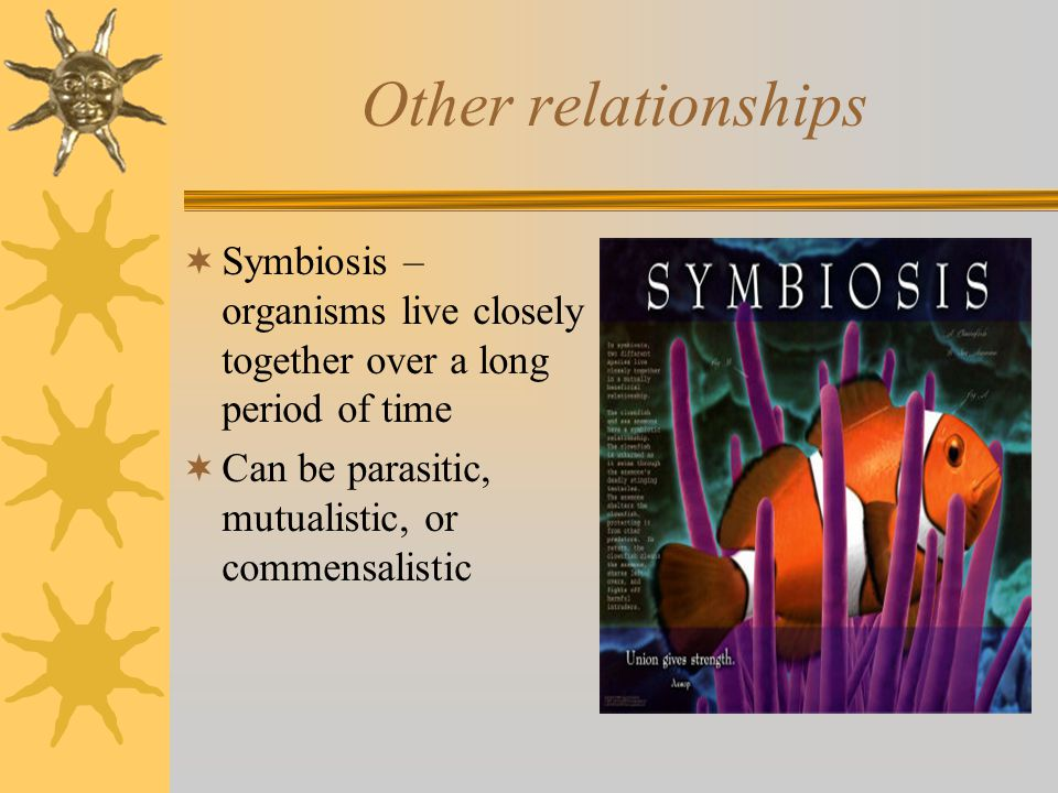 Other relationships  Symbiosis – organisms live closely together over a long period of time  Can be parasitic, mutualistic, or commensalistic