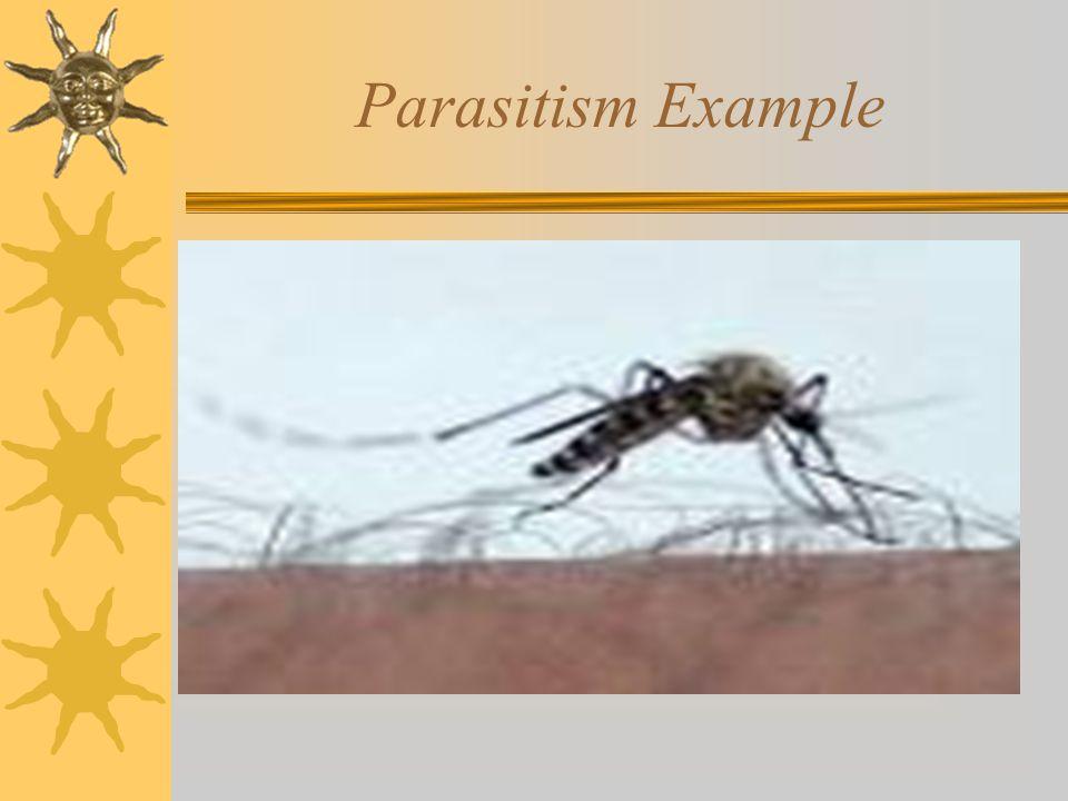 Parasitism Example