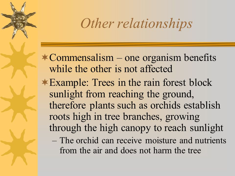 Other relationships  Commensalism – one organism benefits while the other is not affected  Example: Trees in the rain forest block sunlight from reaching the ground, therefore plants such as orchids establish roots high in tree branches, growing through the high canopy to reach sunlight –The orchid can receive moisture and nutrients from the air and does not harm the tree