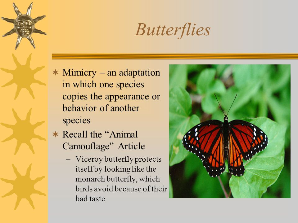 Butterflies  Mimicry – an adaptation in which one species copies the appearance or behavior of another species  Recall the Animal Camouflage Article –Viceroy butterfly protects itself by looking like the monarch butterfly, which birds avoid because of their bad taste