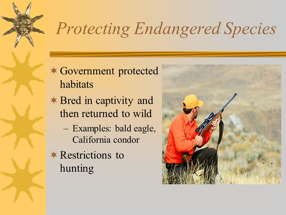 Protecting Endangered Species  Government protected habitats  Bred in captivity and then returned to wild –Examples: bald eagle, California condor  Restrictions to hunting