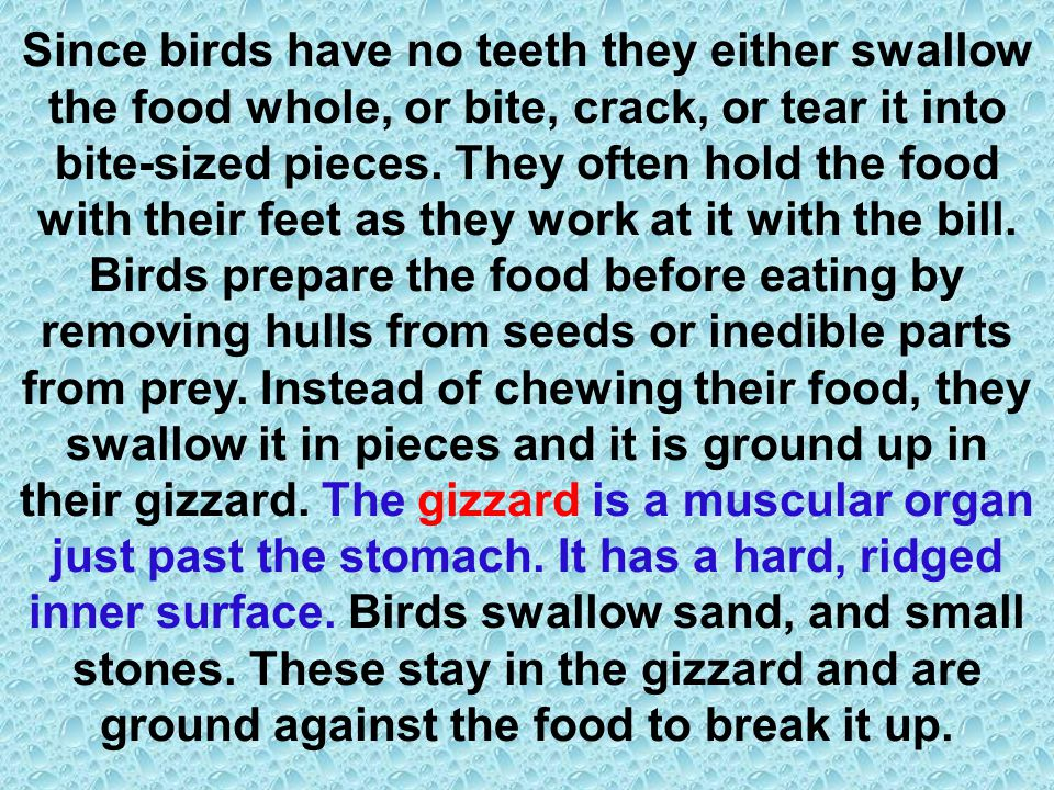 Since birds have no teeth they either swallow the food whole, or bite, crack, or tear it into bite-sized pieces. They often hold the food with their f