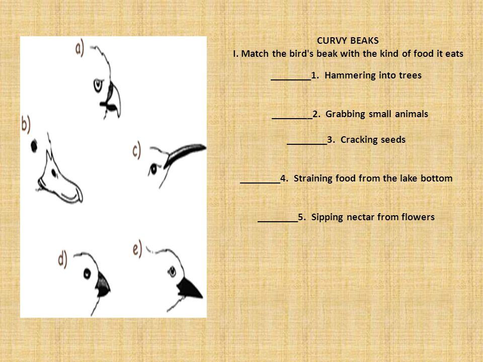 CURVY BEAKS I. Match the bird's beak with the kind of food it eats ________1. Hammering into trees ________2. Grabbing small animals ________3. Cracki
