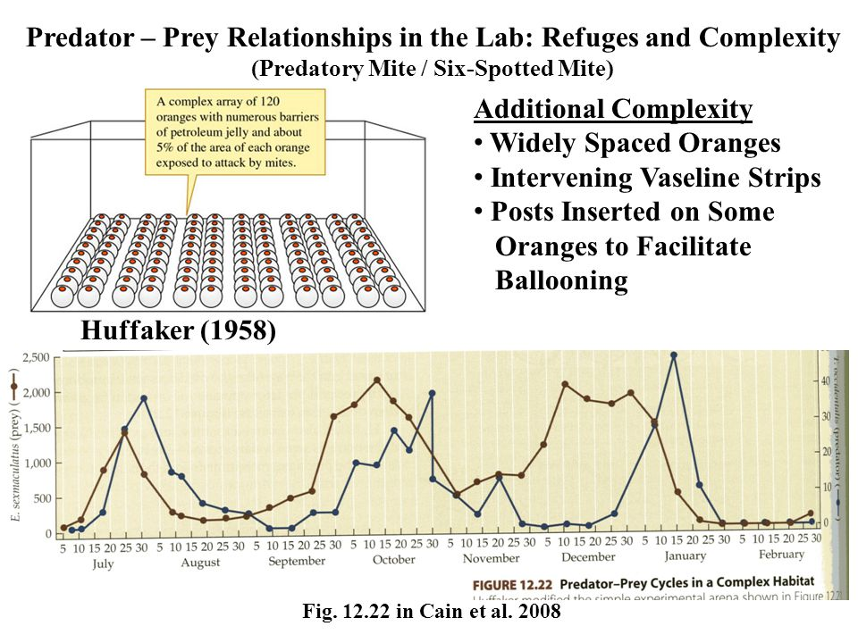 Huffaker (1958) Predator – Prey Relationships in the Lab: Refuges and Complexity (Predatory Mite / Six-Spotted Mite) Fig.